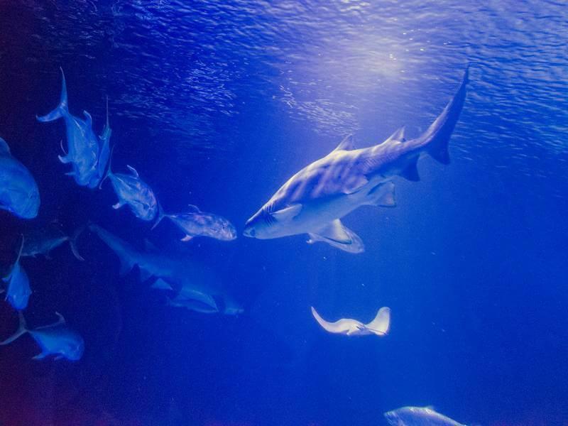 Hajar och annat spännande i Oceanogràfic i Valencia.