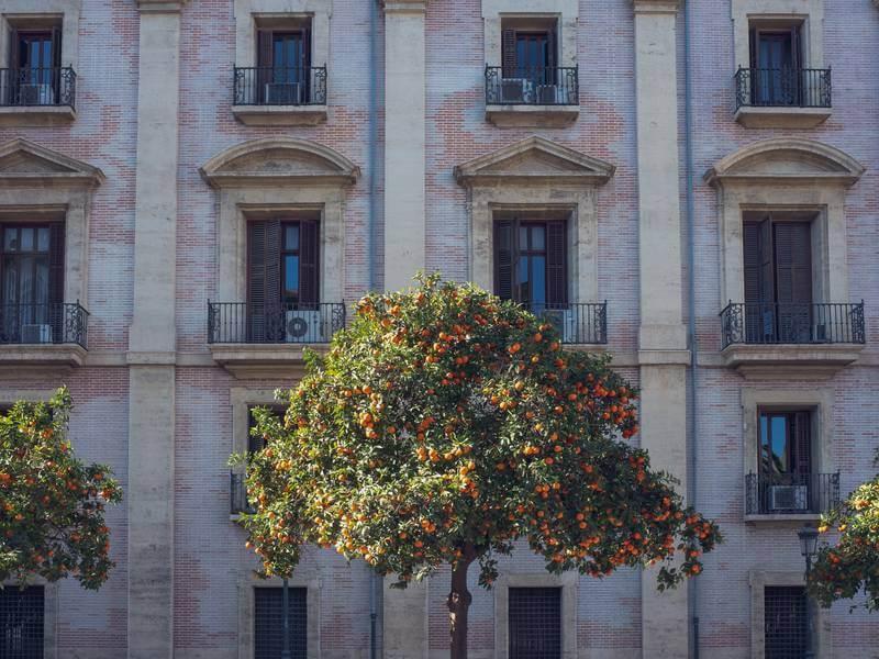 Mandariner är en del av stadsbilden