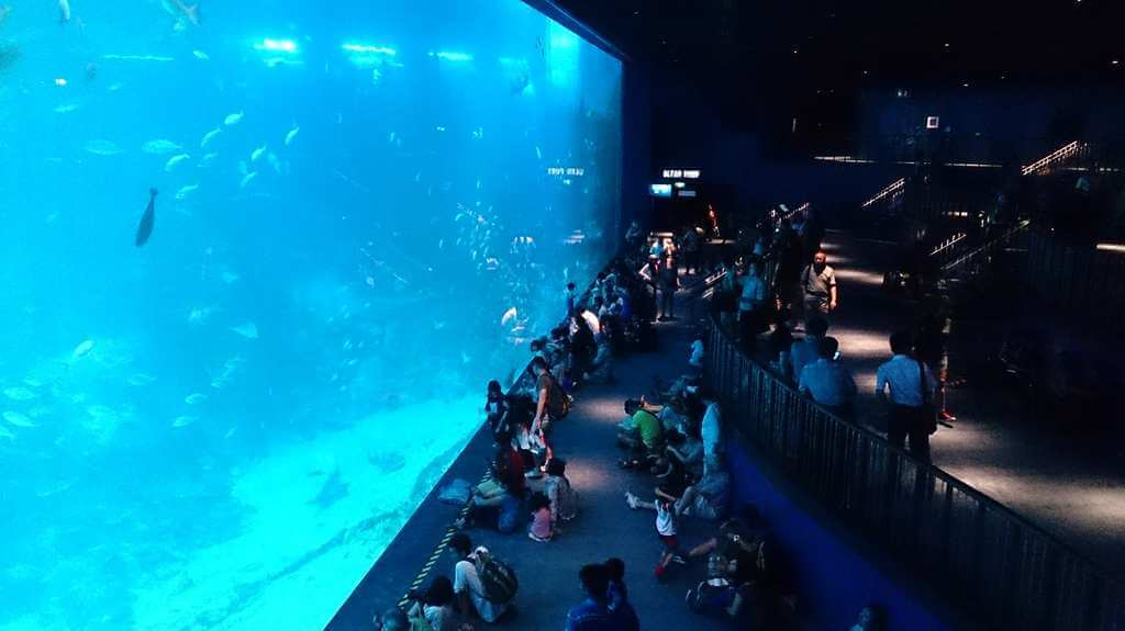 S.E.A Aquarium, Singapore