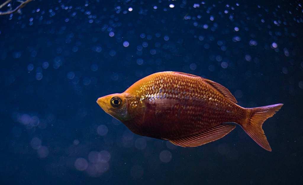 Världens största akvarium